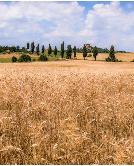 Toscana juni 2015